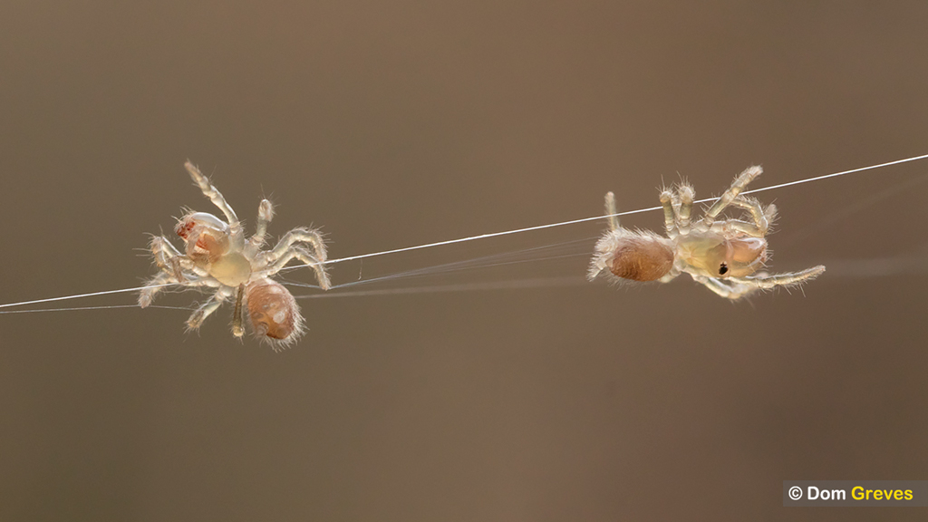Arachnews: March 23, 2020
