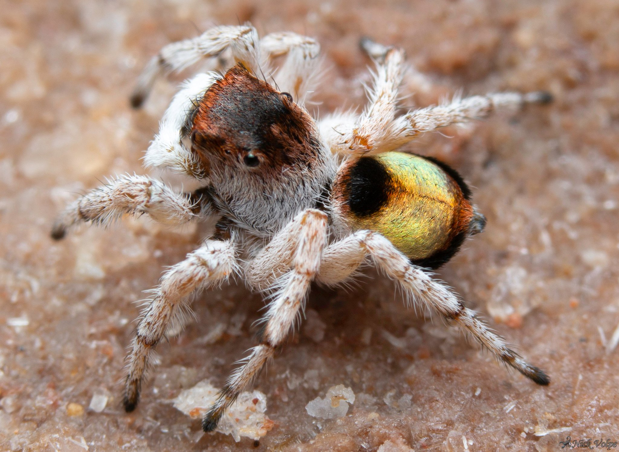 Arachnews: March 30, 2020