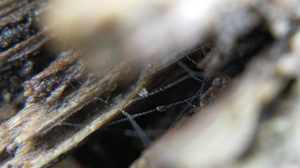Dew-covered lines of silk in a rotten log
