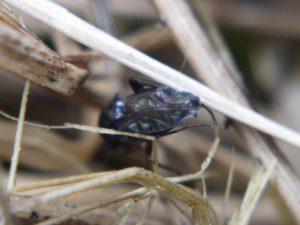Blurry macro photo of mystery bug