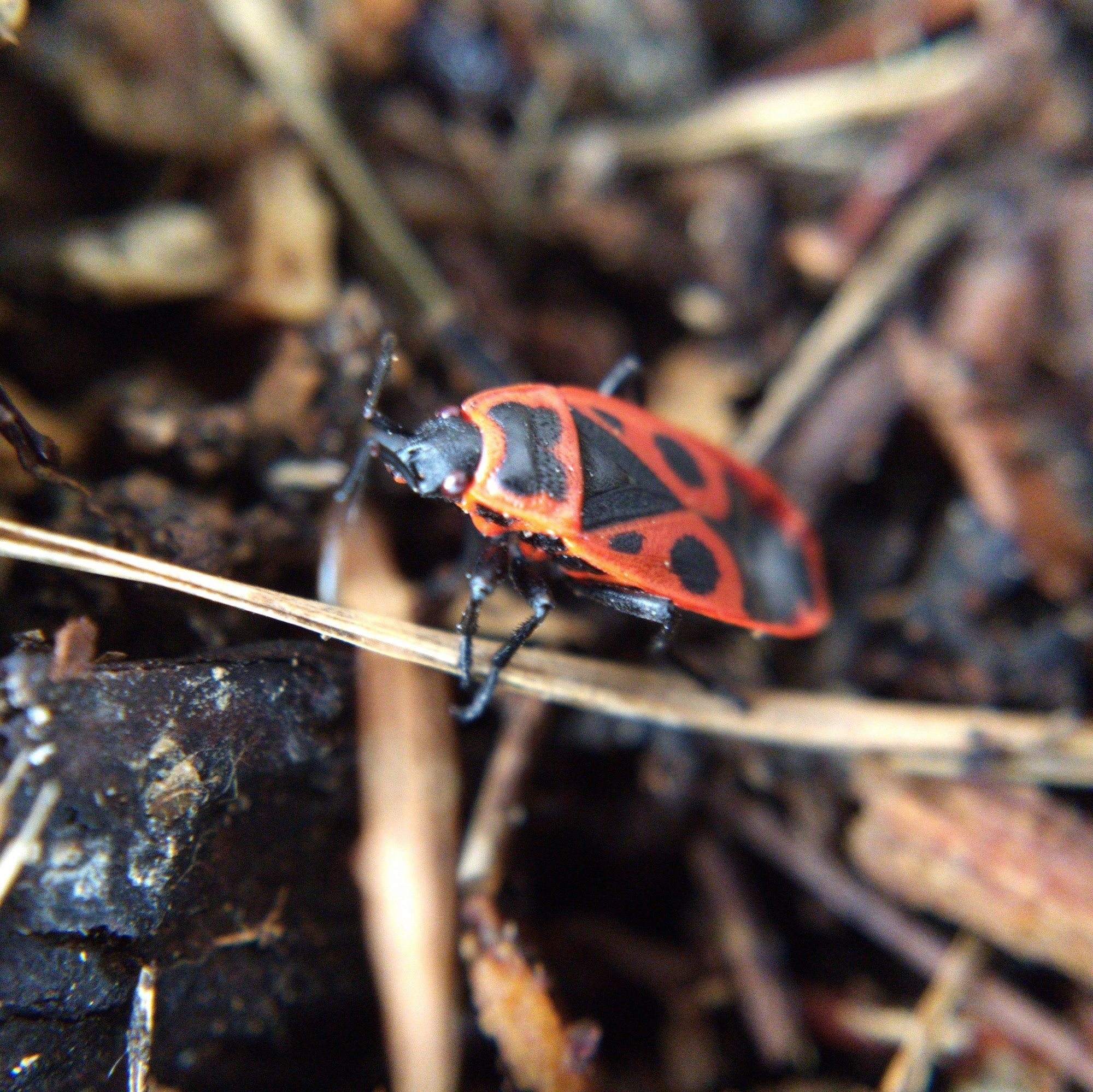 A bug with a striking red and black pattern on its back